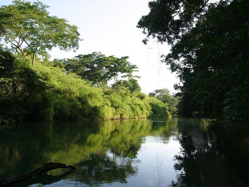 Iguana Cabana - Cohune Palms River Cabanas, vacation rental in Bullet Tree Falls
