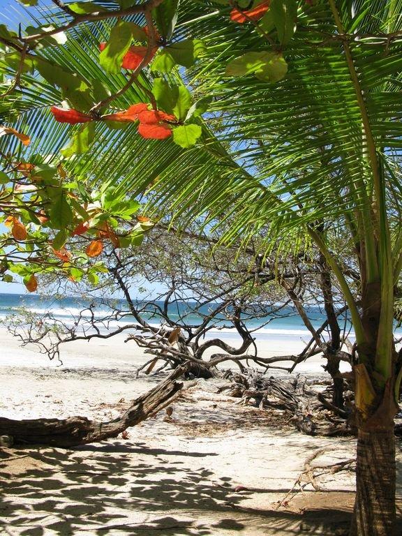 View of Playa Avellanas from Lola's.