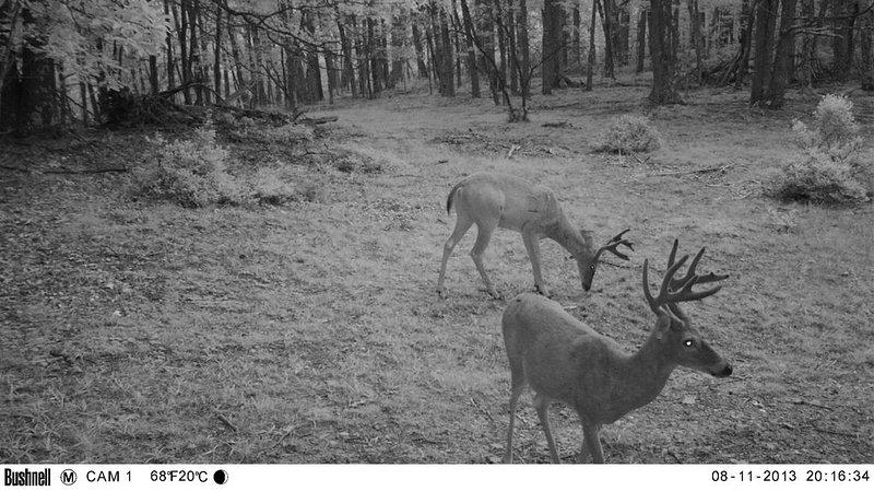 Algunas fotos de nuestras cámaras de juegos. Mucha vida salvaje en la propiedad