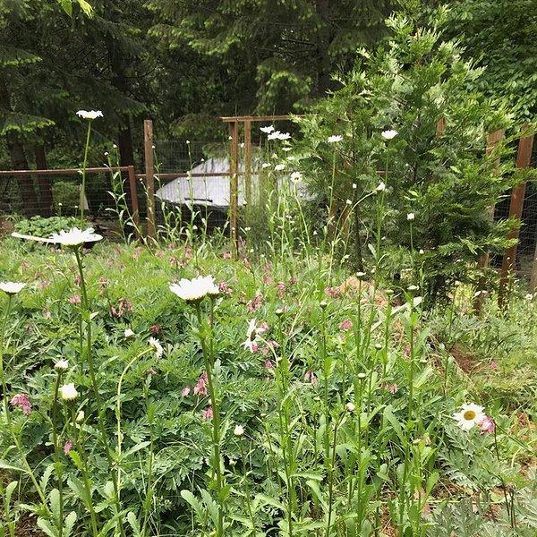 Los prados siempre cambian con flores silvestres de temporada y hongos.