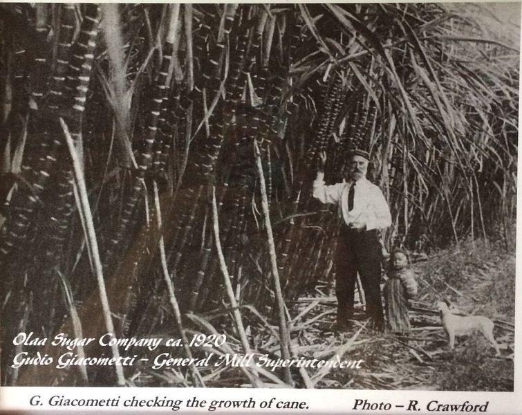 Charming Historic Plantation era family home 2 miles from Volcanoes Nat'l Park!, alquiler de vacaciones en Parque Nacional de los Volcanes de Hawaii