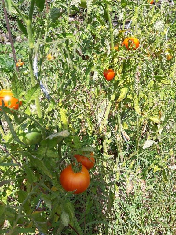 garden available