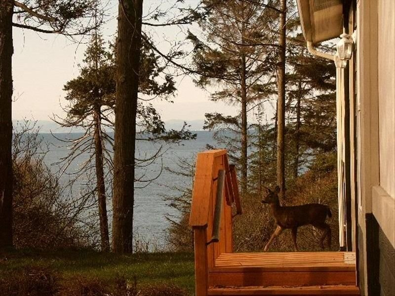 Water Views, Private Beach Access Between Sequim and Port Angeles, Ferienwohnung in Clallam County