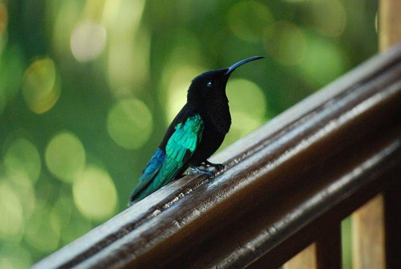 nuestro amigo el colibrí