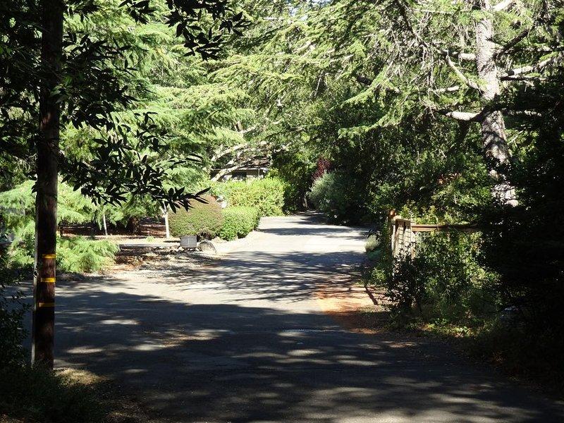 Notre rue paisible avec des arbres ...