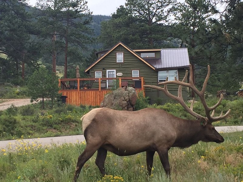 Original Rocky Mountain National Park Cabin W/Modern Updates &360 Mountain Views, aluguéis de temporada em Estes Park