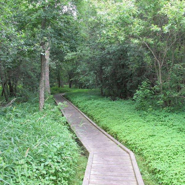 Kishwauketoe Nature Conservancy boardwalk in Williams Bay (.4 Miles)