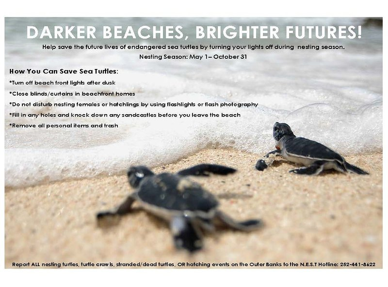 Protecting our beaches and wildlife is important to us!