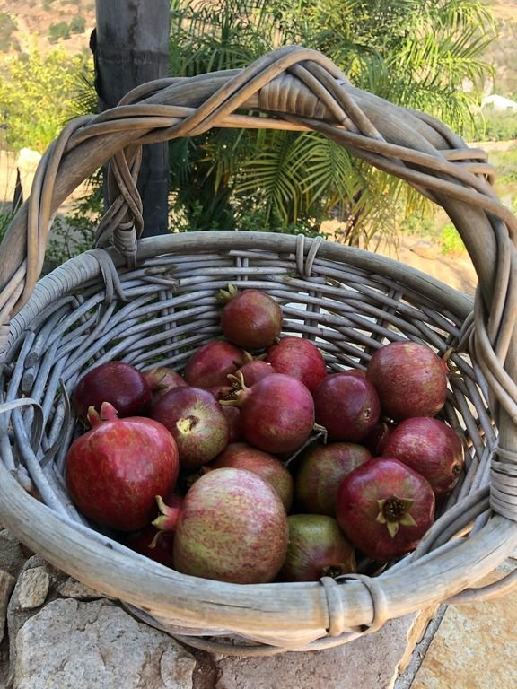 Weitere köstliche Früchte aus der Immobilie