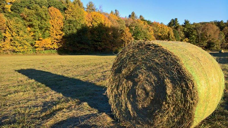 nearby field in fall