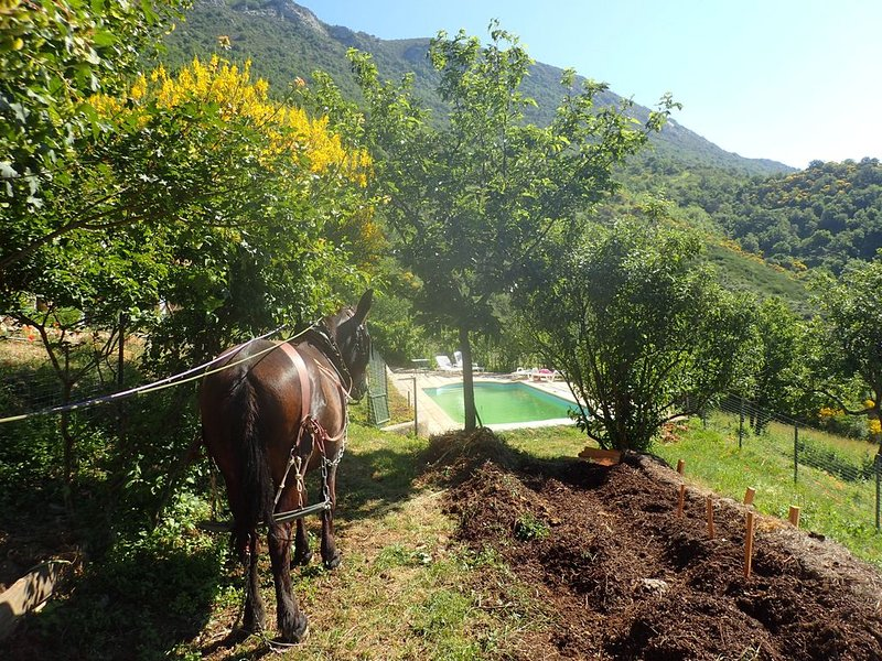 trabalho de jardim no início da primavera