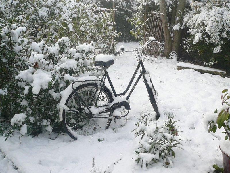 Jardín en la nieve