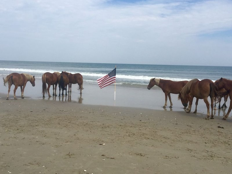 Wild mustangs on 4x4 beach, 3 miles north of Serenity Now