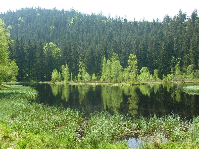 Ferienwohnung Dorothea Rozek, (Forbach), LHS 02216-Buhlbachsee bei Baiersbronn