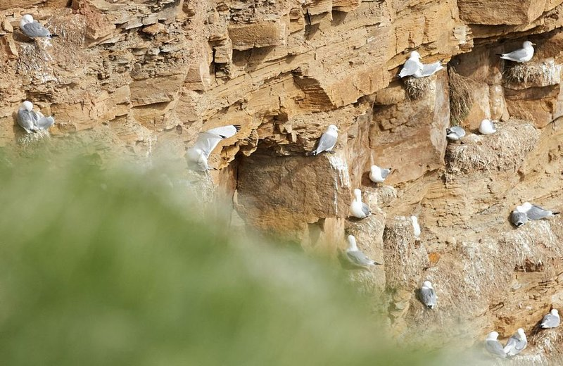 The cliffs at Whitby Lighthouse