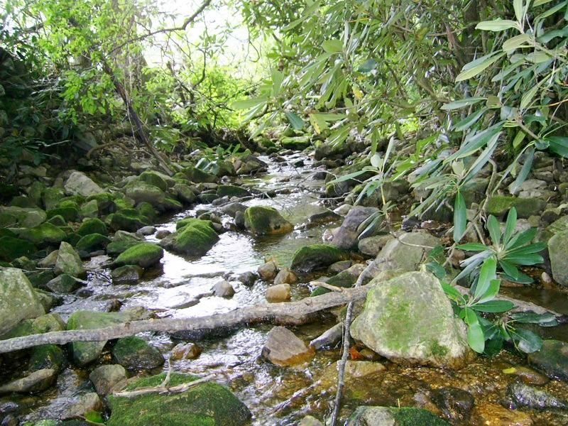 BEAUTIFUL SETTING IN THE WOODS WITH YEAR-ROUND CREEK, aluguéis de temporada em Cosby