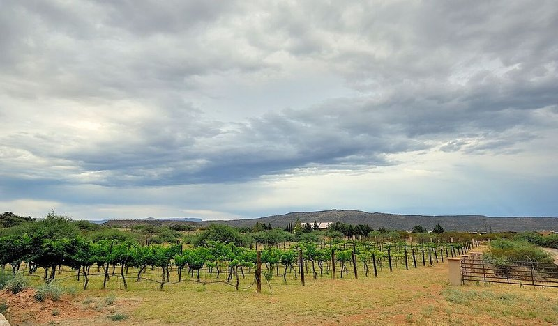 *SANITIZED*  ~ Sorelle Vineyard ~ Spectacular Estate, holiday rental in Cornville