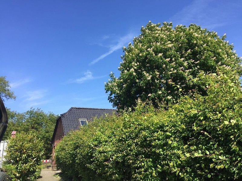 Ferienhaus für 6 Gäste mit 90m² in Fehmarn OT Fehmarnsund (11086), holiday rental in Grossenbrode