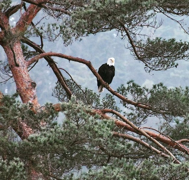 Watch for our resident Bald Eagles.