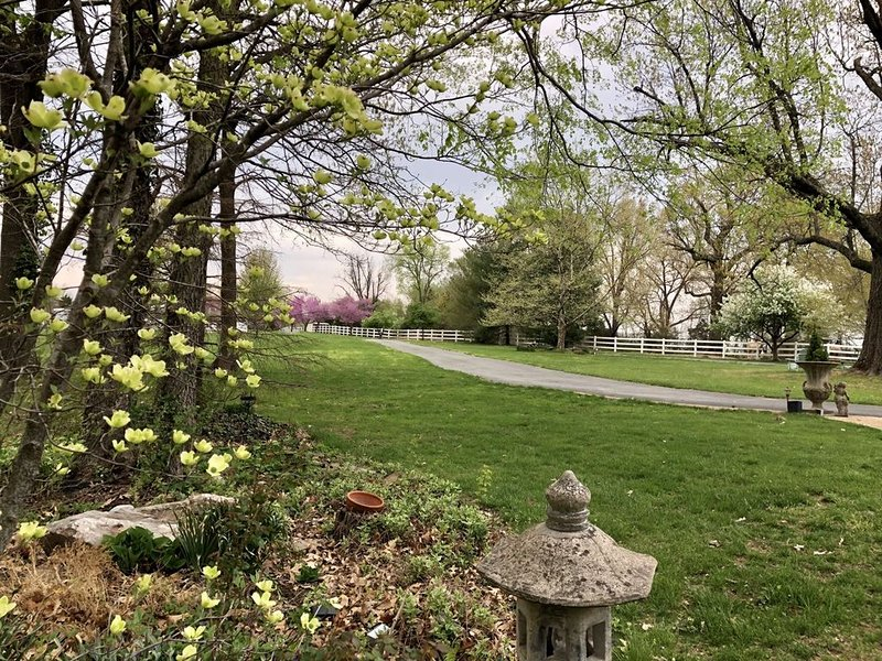 Beautiful Farm Living with Horses, alquiler de vacaciones en Springfield