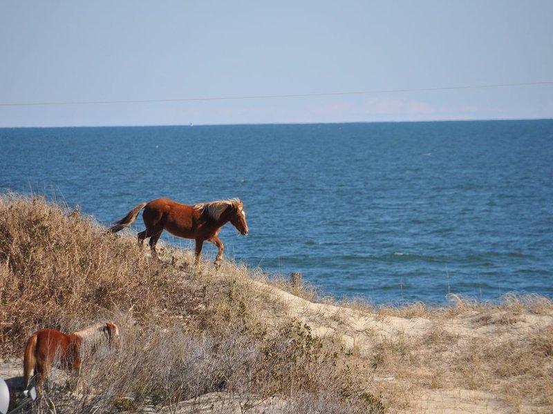 Life on a Sandbar! 4 Wheel Drive Beach, casa vacanza a Currituck