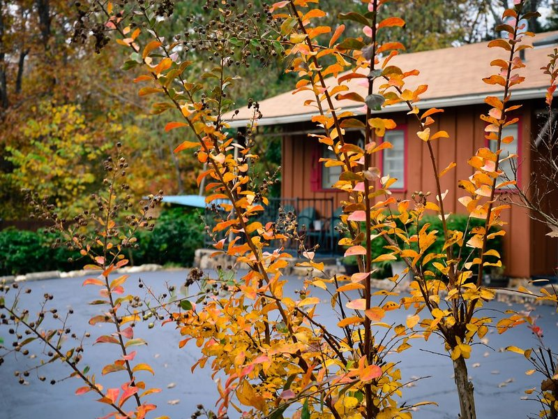 Cabin 2-bdrms with Pool and Boat Dock Access on Norfork Lake, Arkansas, aluguéis de temporada em Salesville