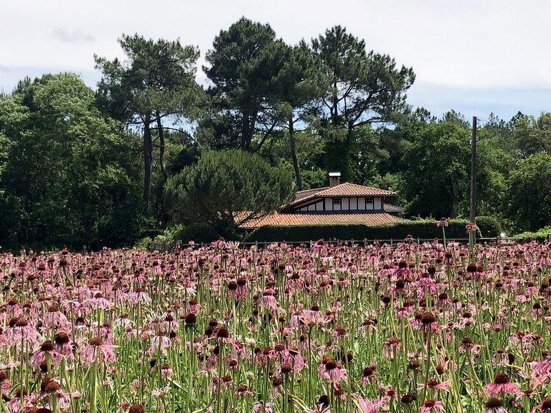 Charmant 2 pièces plein sud -Nature Calme proche de l'océan,4 golfs proximité, holiday rental in Soustons