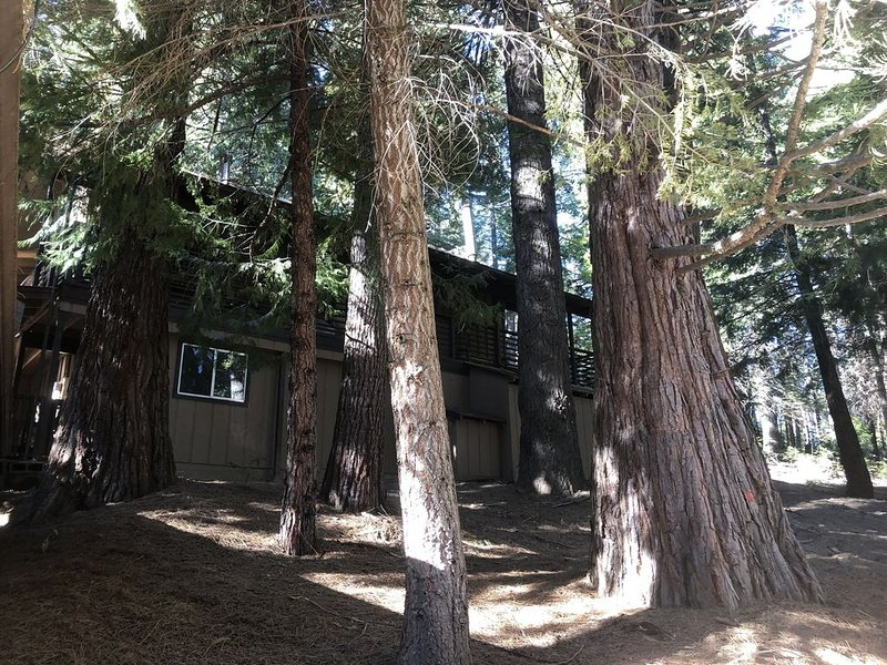 Yosemite's Chalet in The Pines-A rustic cabin Retreat, holiday rental in Fish Camp
