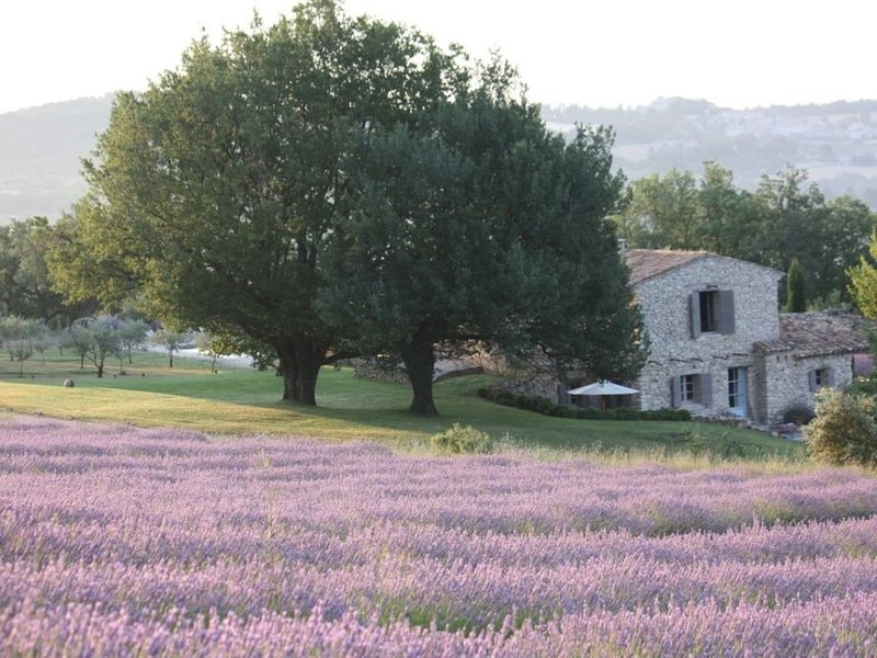 Restored French Farmhouse surrounded by Lavender Fields with Panoramic Views, holiday rental in Murs