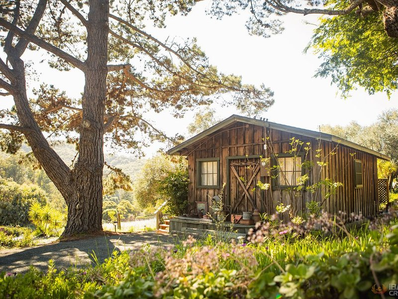 Come Relax at the Olive Tree Cabin, holiday rental in Arroyo Grande
