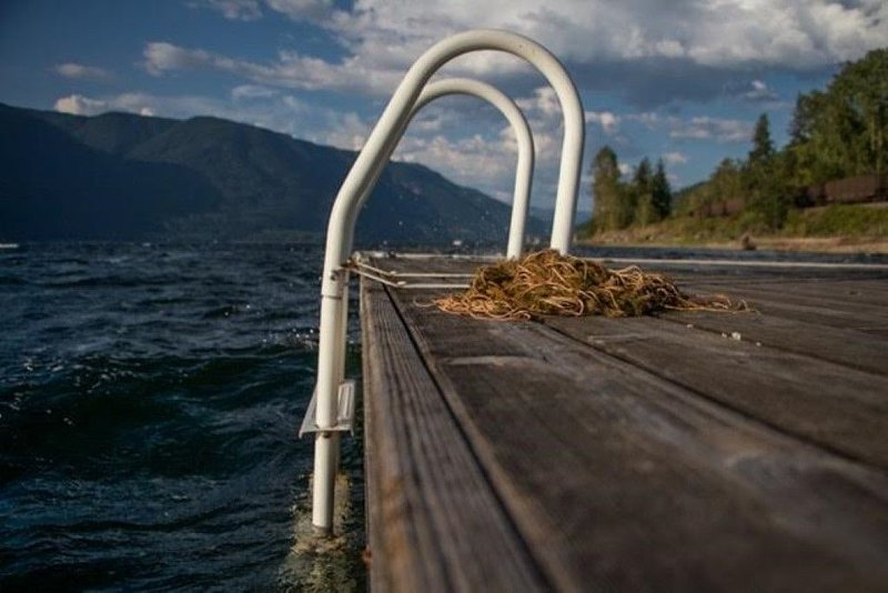 Shuswap Lake waterfront, private beach, and fire pit., alquiler de vacaciones en Salmon Arm