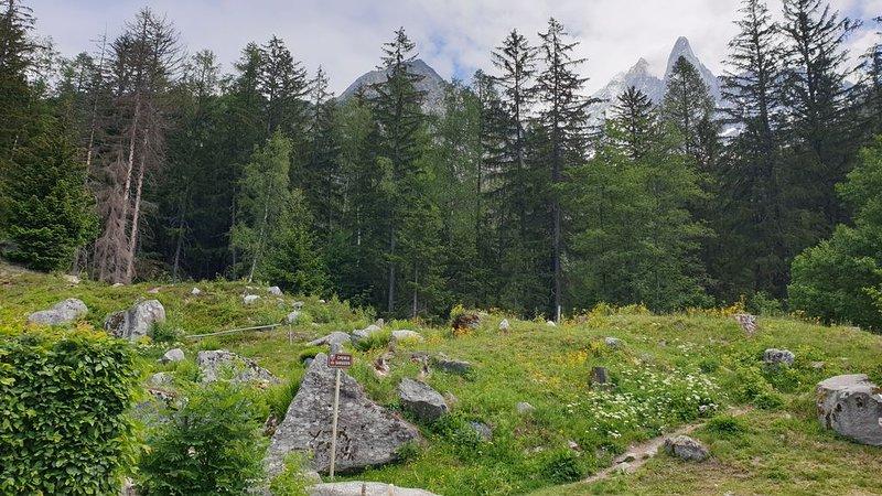 Chamonix: Appt fôret / départ piste ski nordique, holiday rental in Les Praz-de-Chamonix