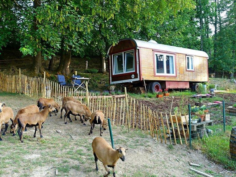 Zirkuswagen auf der Schafweide, alquiler de vacaciones en Bettingen
