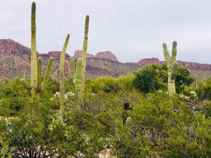 Bohemian desert sanctuary with stunning views!, holiday rental in Marana