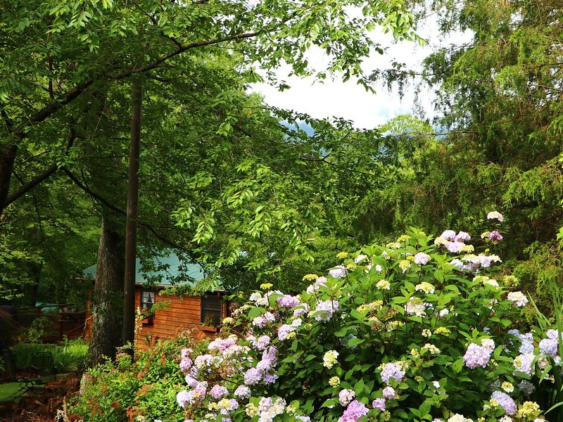 Romantic Mountain Getaway For Couples! Pet Friendly!, holiday rental in Candler