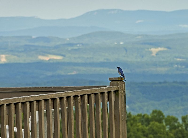 Fancy Gap Va overlooking Pilot Mountain, fantastic seven county views., holiday rental in Mount Airy
