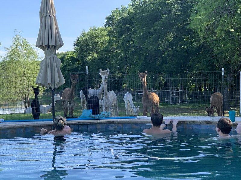Alpaca Ranch Barndominium, holiday rental in Waxahachie