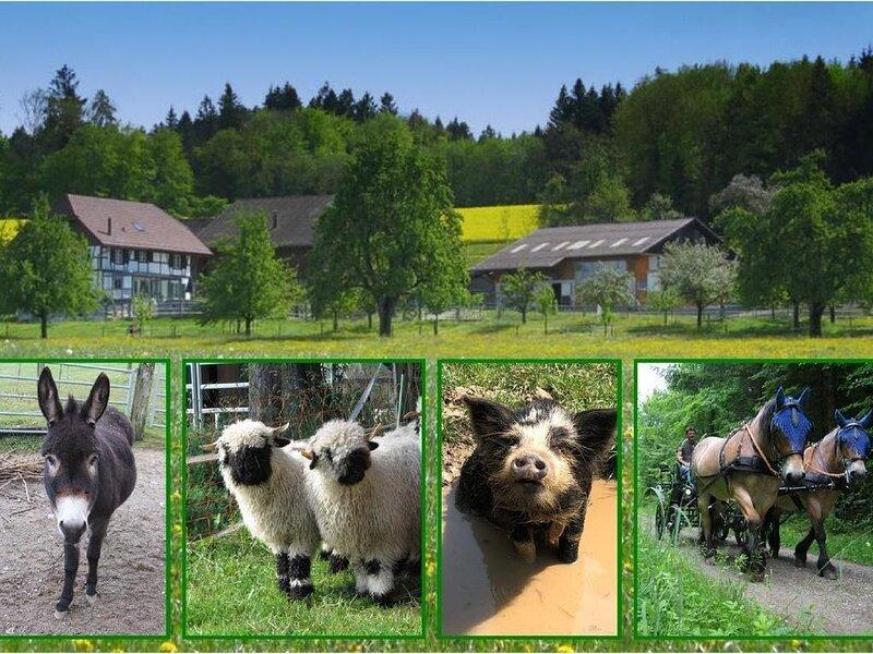 Ferienwohnung Eschenz für 4 - 6 Personen mit 2 Schlafzimmern - Ferienwohnung in, holiday rental in Neuhausen am Rheinfall