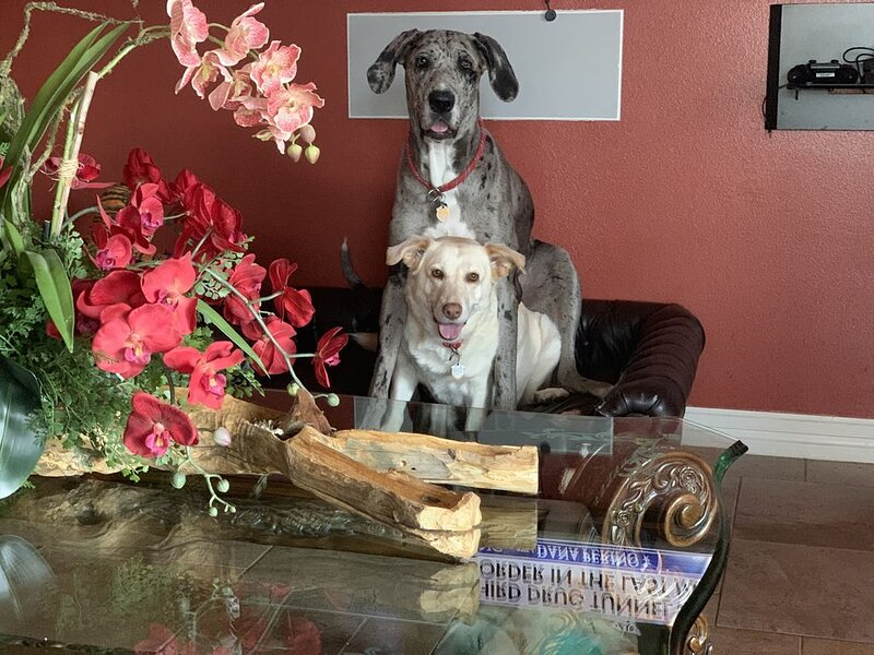Dog-friendly � Hot Tub & Close Beach Access �️  RN/Doctor/911 Discounts �, aluguéis de temporada em Port Isabel