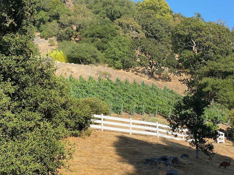 Studio cottage retreat in a vineyard setting, location de vacances à Santa Rosa