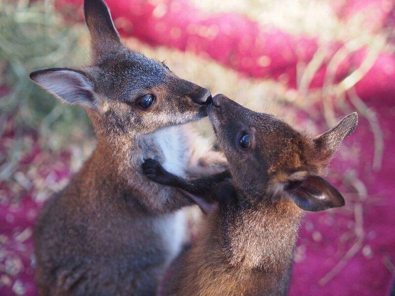 Tiandi Wildlife Sanctuary Farmstay, holiday rental in Braidwood