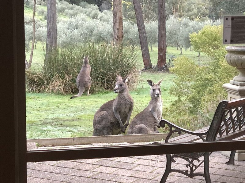 COUNTRYSIDE Spa COTTAGE Daylesford-Hepburn  7acres dams olive grove +kangaroos, alquiler de vacaciones en Elevated Plains