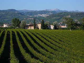 Family fun in the vineyards of Valpolicella