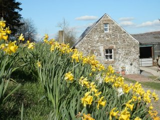 Cosy, 2 bedroom cottage plus free Shepherd's Hut, on forest edge