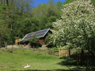 Family/pet-friendly woodland retreat in Mortimer Country near historic Ludlow
