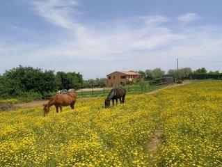 Giardini delle Fate - Campiglia Marittima 6 km dal mare San Vincenzo - Baratti