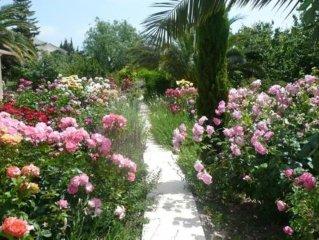 En Provence, au coeur des Alpilles, a la campagne dans une oliveraie