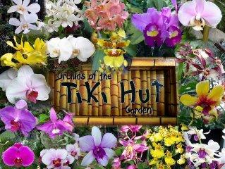 Tiki Hut Cottage - Lush Tropical Garden, Walk to Tunnels Beach