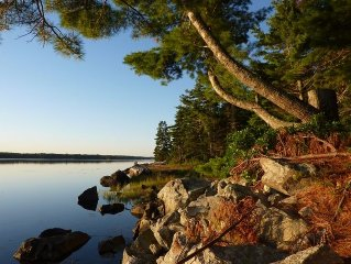 Peace and Tranquility in the Woods by a Pristine Ocean Bay