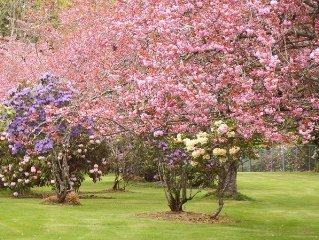 Spacious Home In Beautiful Garden - Sleeps 6-10 - Walk To Beaches/Town